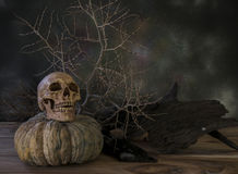 Cranio e piante asciutte 3 Immagini Stock Libere da Diritti