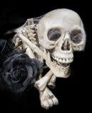 Cranio e rosa del nero Immagine Stock
