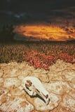 Cranio e siccità Fotografia Stock Libera da Diritti