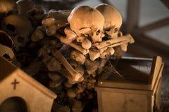 Cranio ed ossa Fotografia Stock Libera da Diritti