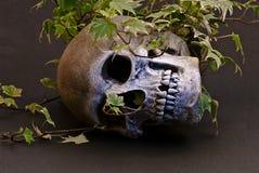Cranio in edera Fotografie Stock Libere da Diritti