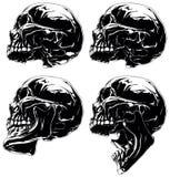 Cranio grafico dettagliato nell'insieme della proiezione di profilo Immagine Stock