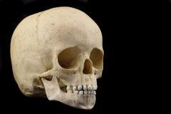Cranio infantile umano Fotografie Stock