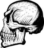 Cranio laterale spaventoso royalty illustrazione gratis