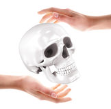 Cranio in mani Immagine Stock