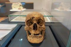Cranio medievale fotografie stock