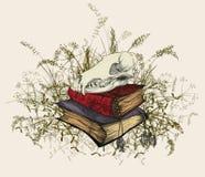 Cranio nei libri occulti, circondati da un'erba Fotografia Stock