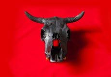 Cranio nero dei tori Immagine Stock