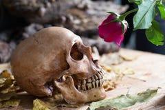 Cranio Rose Love Immagine Stock