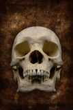 Cranio spaventoso Fotografie Stock