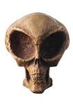 Cranio straniero Immagine Stock