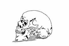 Cranio su fondo bianco Immagini Stock Libere da Diritti