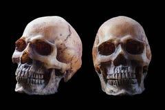 Cranio su priorità bassa nera Fotografie Stock Libere da Diritti