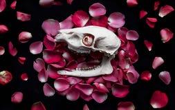 Cranio sui petali Fotografia Stock Libera da Diritti