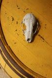 Cranio sul barilotto Fotografie Stock Libere da Diritti