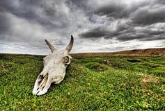 Cranio sulla pianura verde Fotografie Stock Libere da Diritti