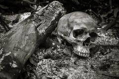 Cranio sulle ceneri Fotografia Stock