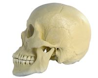 Cranio umano fotografia stock