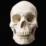 Cranio umano. Fotografia Stock Libera da Diritti