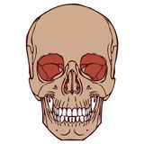 Cranio umano 06 Fotografie Stock Libere da Diritti