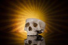 Cranio umano Immagine Stock