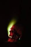 Cranio umano Fotografie Stock Libere da Diritti