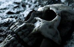 Cranio umano antico Concetto di apocalisse rappresentazione 3d illustrazione vettoriale