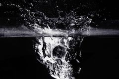 Cranio umano in bianco e nero Immagine Stock Libera da Diritti