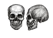 Cranio umano, illustrazione in bianco e nero Fotografia Stock Libera da Diritti