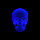 Cranio umano nei raggi X isolati Fotografia Stock
