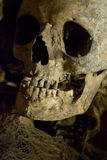 Cranio umano reale 2 Immagine Stock