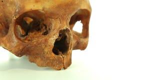 Cranio umano su fondo bianco stock footage