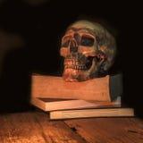 Cranio umano su fondo scuro Fotografie Stock
