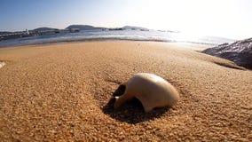 Cranio umano sulla spiaggia di sabbia archivi video