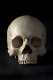 Cranium. Homo sapience cranium isolated on black background Stock Images