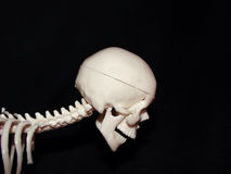 Cranium. Some the human skeleton part royalty free stock image