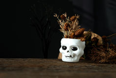 cranium Foto de archivo libre de regalías