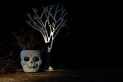 Cranium stock photography