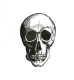 Cranium. Hand drawn cranium with black ink Stock Photos