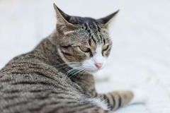 Cranky cat sleeping on the sidewalk in the morning. Stock Photos
