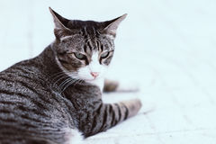 Cranky cat sleeping on the sidewalk in the morning. Royalty Free Stock Images