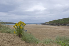 Crantock Beach Stock Photography
