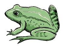 Crapaud, animal amphibie Photo libre de droits