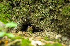 Crapaud chaud en trou moussu d'arbre images libres de droits
