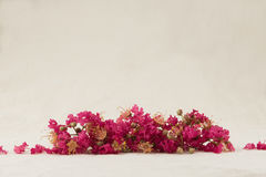 Crape myrtle flowers bouquet. With copy space stock photo