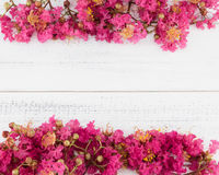 Crape myrtle flowers bouquet. On white wood background with copy space royalty free stock image