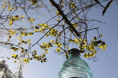 Crape myrtle and solar lantern. Crape myrtle with hanging solar lantern Stock Images