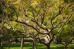 Crape Myrtle. Tree branch in a outdoor royalty free stock photo