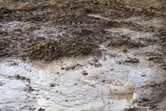 Crash. breakthrough plumbing. it flows into the street. dirt and sand are formed. consequence of repair. Accident leakage water washed ground road flooded marsh stock image