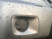 Crashed insects on car bumper. Stock Images